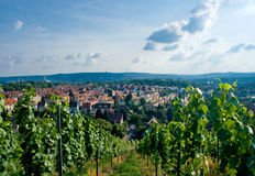 Vineyard and residential district in Stuttgart. Royalty Free Stock Photos