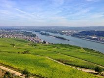 Vineyard in the Rheingau region Royalty Free Stock Images