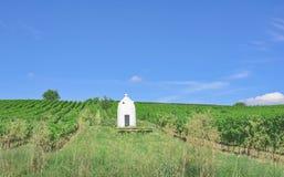 Vineyard,Rhinehessen,Germany Royalty Free Stock Image