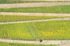 Vineyard in Rhineland Stock Photography