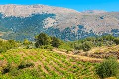 Vineyard. Rhodes, Greece Royalty Free Stock Photography