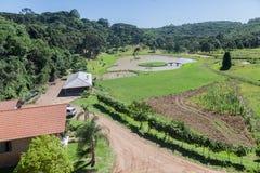 Vineyard in Rio Grande do Sul Royalty Free Stock Image