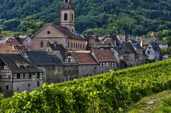 Vineyard of Riquewihr in Alsace Stock Photography