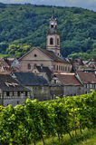 Vineyard of Riquewihr in Alsace Stock Photo