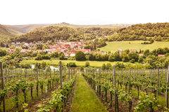 Vineyard on River Nahe, Germany Royalty Free Stock Images