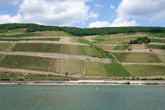 Vineyard at a river Royalty Free Stock Photo