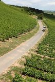 Vineyard Road Stock Image