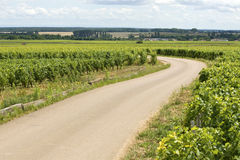 Vineyard, road in Bourgogne, Burgundy. Stock Photo