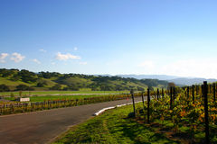 Vineyard Road Near Los Olivos, California Stock Photo