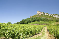 Vineyard, with Roche de Solutre. Beaujolais. Stock Photo