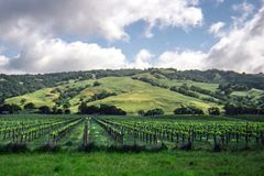 California vineyard and rolling hills in background stock photo