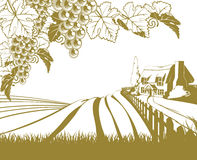 Vineyard rolling hills scene stock illustration