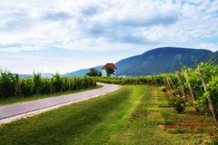 Vineyard with rows of grape vine in sunrise with old building, villa on top of the vine yard, traditional authentic. European winery, Slovenske Konjice stock image