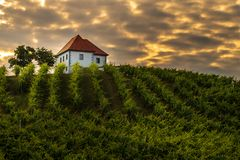 Vineyard with rows of grape vine in sunrise, sunset with old building, villa on top of the vine yard, traditional. Authentic European winery, Slovenske Konjice royalty free stock photography