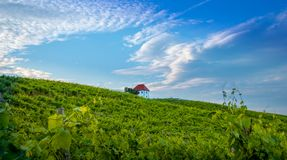 Vineyard with rows of grape vine in sunrise, sunset with old building, villa on top of the vine yard, traditional. Authentic European winery, Slovenske Konjice stock photos