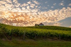 Vineyard with rows of grape vine in sunrise, sunset with old building, villa on top of the vine yard, traditional. Authentic European winery, Slovenske Konjice stock photography