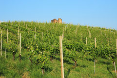 Vineyard and ruin Royalty Free Stock Image