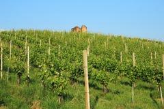 Vineyard and ruin Royalty Free Stock Image