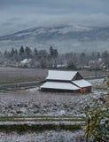Vineyard rural area in winter Royalty Free Stock Image