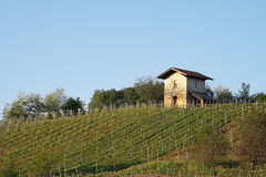 Vineyard with a rural building Stock Images