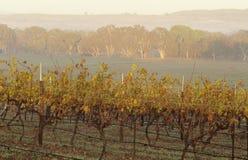 Vineyard in rural landscape Victoria Australia Royalty Free Stock Image