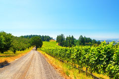 Vineyard in Rural Oregon Royalty Free Stock Photo