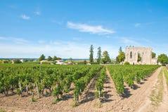 Vineyard of Saint-Emilion. In Aquitaine, France royalty free stock image