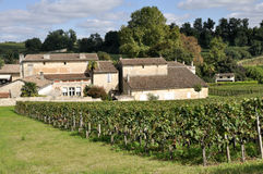 Vineyard at Saint-Emilion, France Royalty Free Stock Image