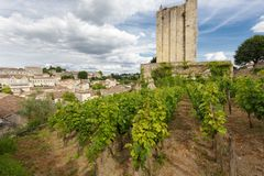Vineyard in Saint Emilion village Royalty Free Stock Image