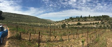 A vineyard Royalty Free Stock Photos