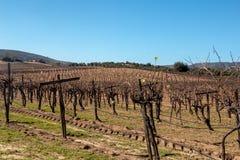 Vineyard in San Antonio de las Minas, Ensenada, Baja california, Mexico. Vineyards in San Antonio de las Minas, Ensenada, Baja california, Mexico royalty free stock photos