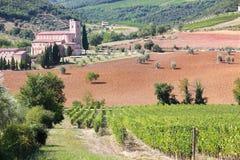 Vineyard in Sant Antimo, Tuscany, Italy Stock Photography
