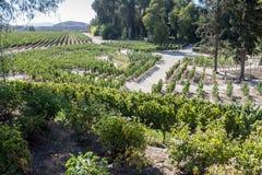 Vineyard in Santiago do Chile Stock Image