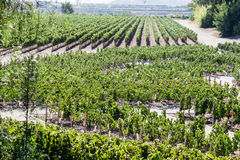 Vineyard in Santiago do Chile stock photography