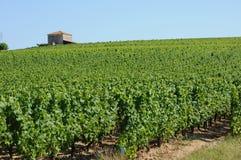 The vineyard of Sauternais in summer Royalty Free Stock Photos