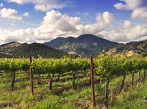 Vineyard Scene Royalty Free Stock Photos