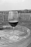 Vineyard Scene Stock Images