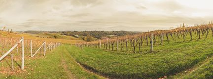 Vineyard scenery Stock Photography
