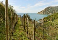 Vineyard at the sea. Stock Photos