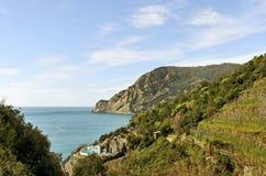 Vineyard at the sea. Royalty Free Stock Photo