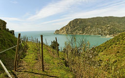 Vineyard at the sea. Stock Image