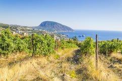 Vineyard and sea Stock Photo