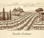 Vineyard seamless landscape. Ink sketch. Hand drawn vector illustration Stock Photography