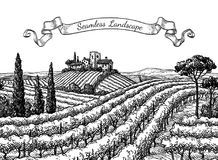 Vineyard seamless landscape. Ink sketch isolated on white background. Hand drawn vector illustration Stock Photos