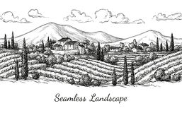 Vineyard seamless landscape. Stock Images