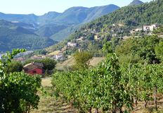 Vineyard at Serra San Quirico. The view of nature near the town of Serra san Quirico in the Marche region of Italy in August Stock Photography