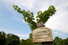 Vineyard Sign Cabernet Royalty Free Stock Image
