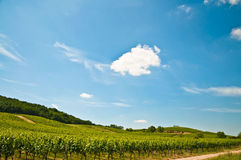 Vineyard with single cloud Stock Photos