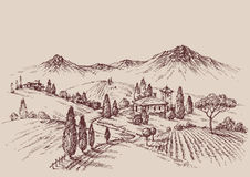 Vineyard sketch Royalty Free Stock Image