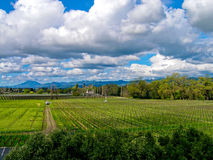 Vineyard and sky Royalty Free Stock Photography
